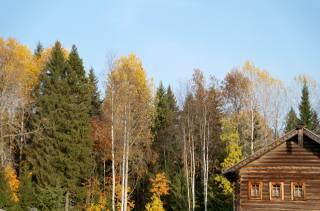trees, hut, the sky