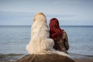 holka, pes, moře