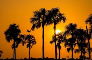 tropics, palm trees, bird, sunset, the sun, evening
