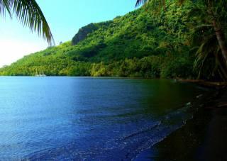 v tropech, krajiny, léto, moře, palmové