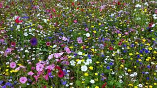 louka, polní, květiny