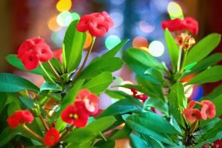 flowers, red, leaves