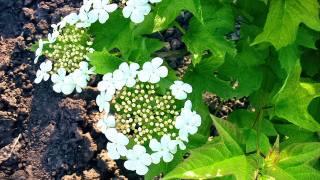 flower, leaves, spring