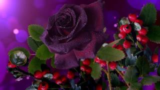 flower, rose, leaves, branches, berries, drops, water, bokeh
