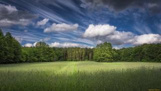 les, tráva, zeleň, nebe, mraky