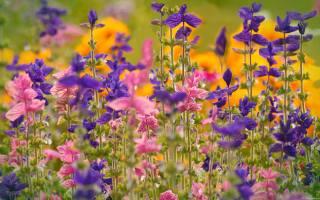 pole, květiny, červenec