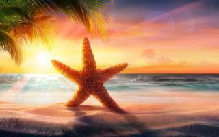 морська зірка, захід, море, пляж, пальми, пісок