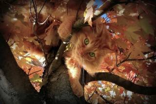 nature, tree, Maple, branches, leaves, autumn, Animal, cat