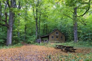 cottage, forest, leaves