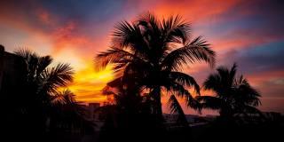 palmové, západ slunce, nebe