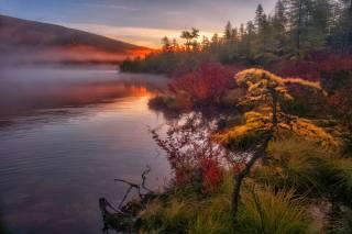Владимир Рябков, Колыма, природа, краєвид, озеро, озеро Джека Лондона, берег, трави, ліс, дерева, осінь, ранок, туман