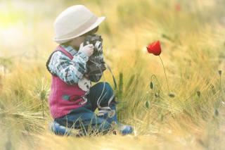 flower, field, child