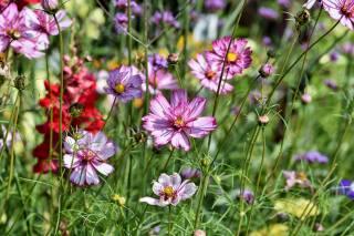 polní květiny, příroda, tráva