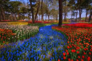 Japan, Park, trees, multi-colored tulips, spring