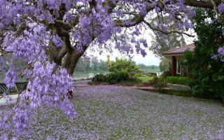 nature, landscape, spring, flowering, tree, lawn, garden, the house, the pond