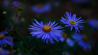makro, astra, flora