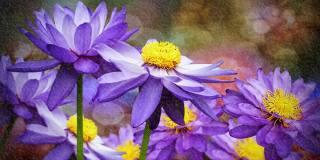 květiny, water lilies, 3d