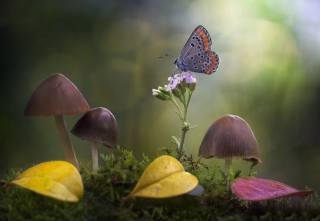 цветок, листья, макро, природа, бабочка, грибы, мох, боке, поганки, Roberto Aldrovandi