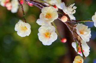nature, spring, branch, flowers, flowering, bokeh