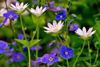 цветы, растение