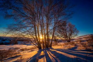 winter, sunset, birch, the sun's rays, trees, shadow, nature, landscape