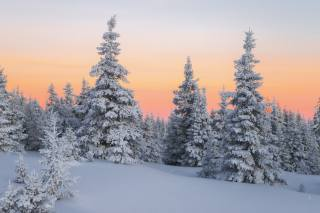 nature, landscape, winter, forest, snow, trees, ate, sunset
