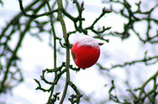 Apple, red, забытое, snow, branches, frost, bokeh