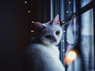 Животное, кот, кошка, взгляд, окно, лампочки, гирлянда