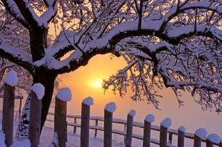 nature, landscape, tree, branches, the fence, winter, snow, Hats, the sky, the sun, dawn, morning