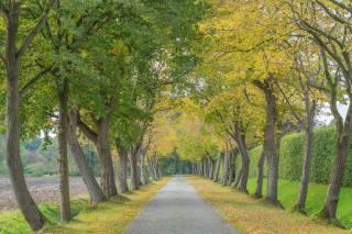 Park, alley, autumn