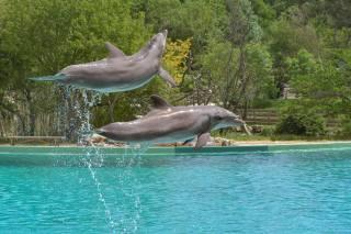 дельфины, брызги, двое, прыжок, животные