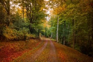 лес, дорога, краски