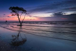 sunset, lonely tree, sea, the ocean, landscape, shore, wave