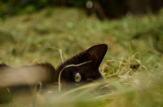 черная кошка, кошка, черный