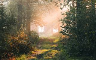 forest, path, branches, rays