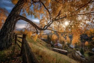 солнце, дерево, лучи, ограждение, осен, город, дома, пейзаж, плёс, Андрей Чиж, природа, склон