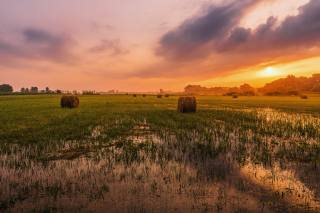 pole, Balíky, sláma, západ slunce