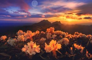 květiny, hory, nebe