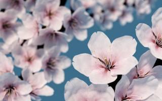 Рендеринг, природа, весна, цветение, цветы, вишня