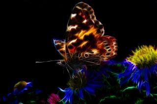 motýl, květina, pozadí, digitální