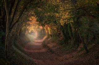 nature, autumn, Park, trees, England, trail, track, the tunnel