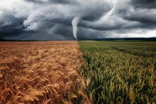 field, nature, tornado, смерчь