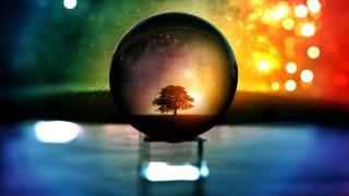 strom, отражается в стеклянном шаре, míč, oslnění
