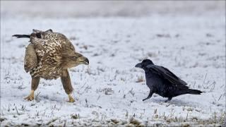 птицы мира, зима