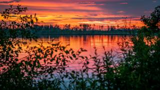 river, sunset, horizon, branches, leaves, nature