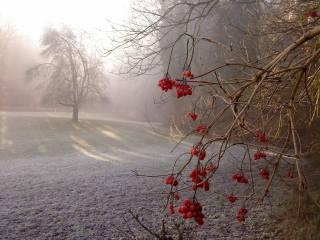 природа, осень, парк, деревья, куст, ягоды, калина, изморозь, иней, мороз