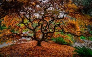 дерево, ветки, природа, осень, листья