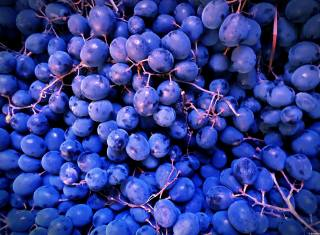 виноград, урожай, октябрь
