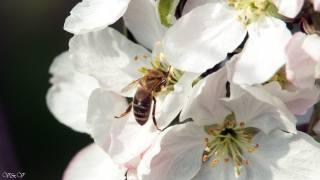 Цветок и бджола, krásně, для души