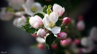 цветок, красивый, для души